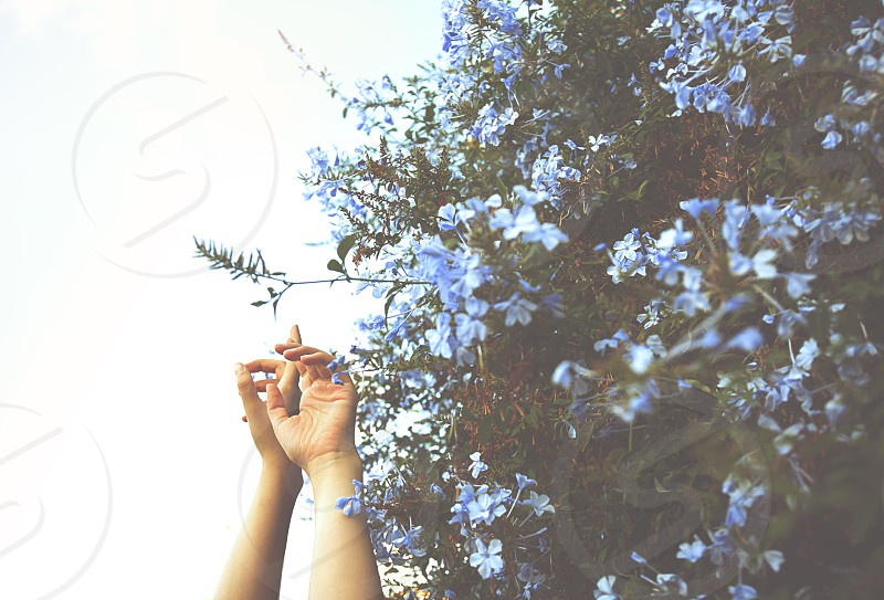 Blue retro vintage flowers hands passion hands challenge sky  photo