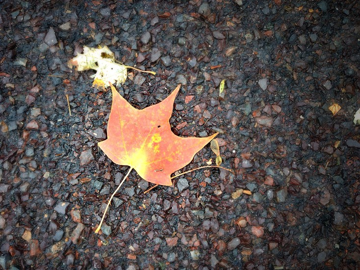 Sign of fall photo