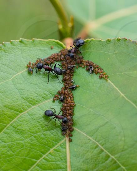 A Billion Bugs on a Leaf photo