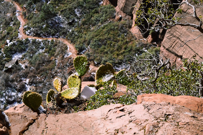 Cactus hiking trail Zionsnow Canyon valley photo