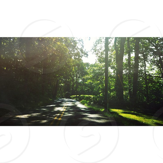 green leafy trees photo