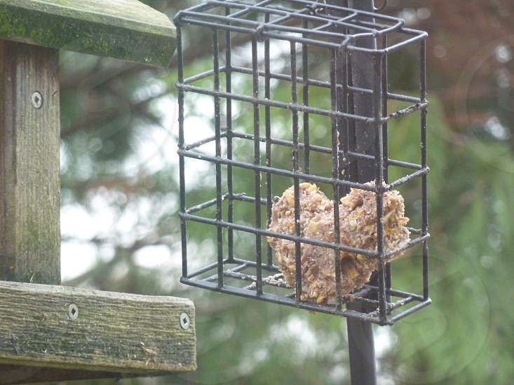 suet heart crafted by the birds photo