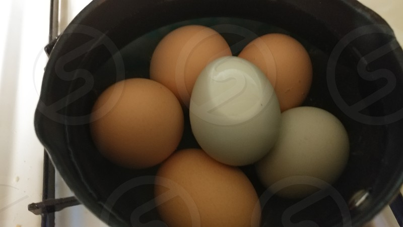 colorful fresh bolied eggs forbreakfast photo