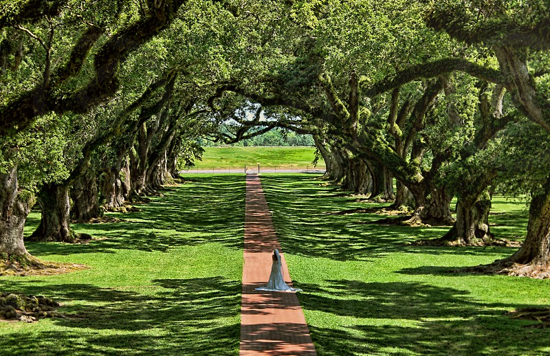 Seen from above a bride walks a path flanked by huge live oak trees. photo
