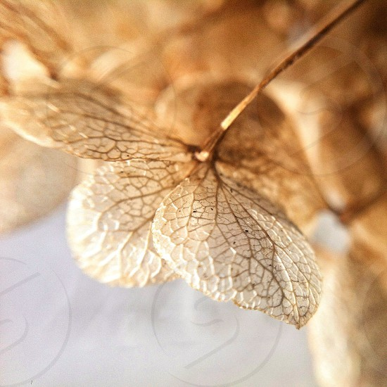 brown leaf macro photography photo