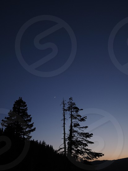 moonrise at sunset. tree silhouettes. photo