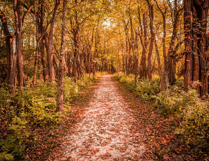 A forest path during sunset in the fall time. photo