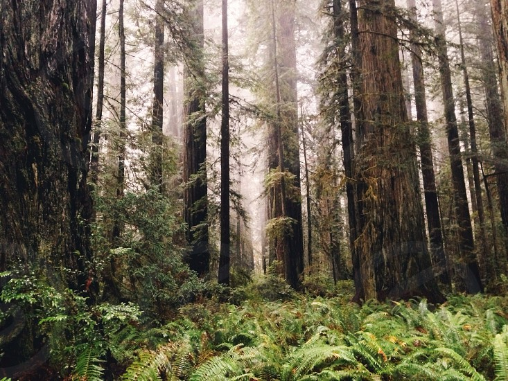 brown tree trunks covered with fog low angle photography photo