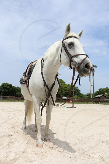 white horse on white sand under blue sky during daytime photo