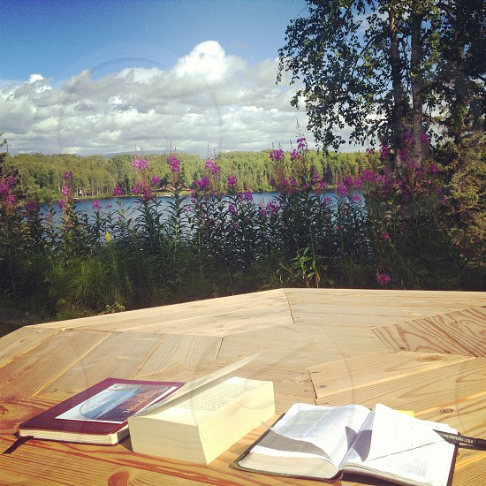Books and Alaskan Summers go good together. Nancy Lake Alaska photo