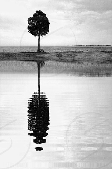 black and white tree and river view photo