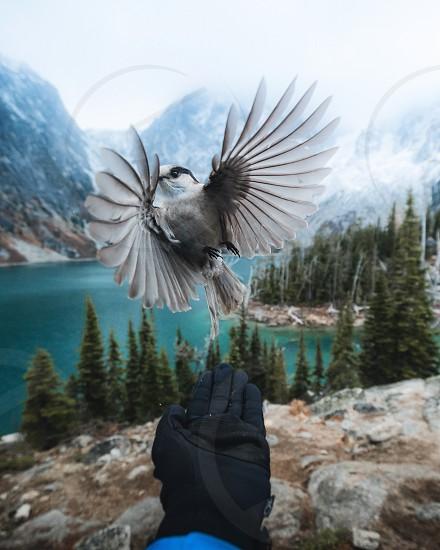 Nature wildlife winter bird photo