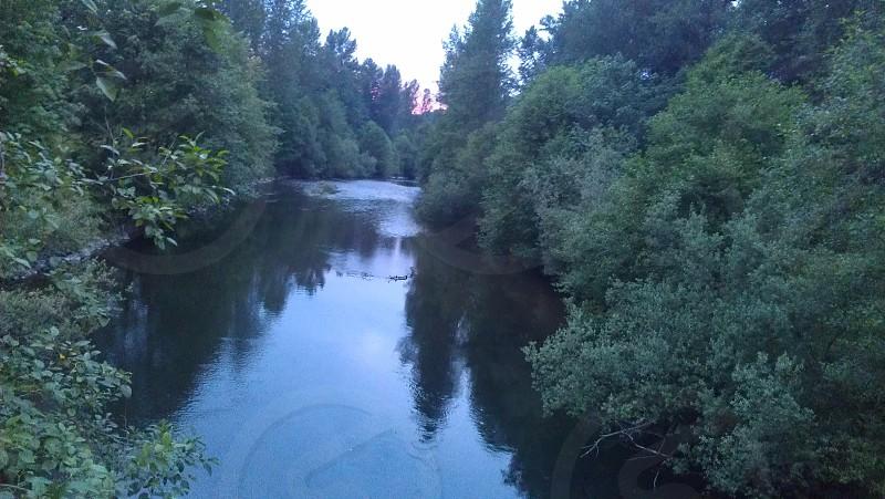 stream and green tress photo