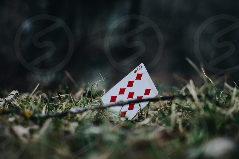 Playing card in a grassy forest. photo