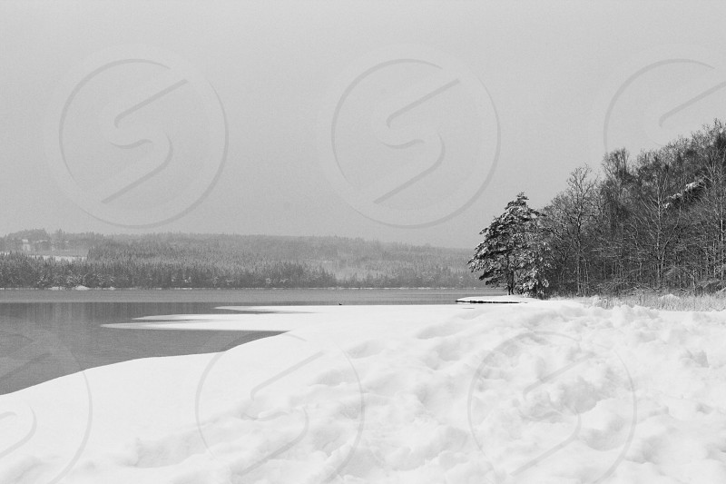 grayscale photo of sand beside body of water surrounded green leaf tree photo
