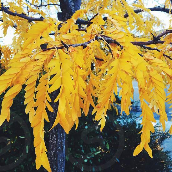 Fall_1 photo