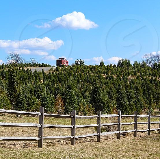 Christmas tree farm in winter. photo