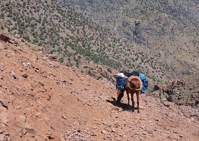 Mule with heavy load in High Atlas mountains in Morocco photo