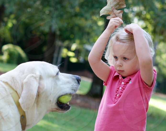 yellow labrador retriever eating green round ball on front of girl photo