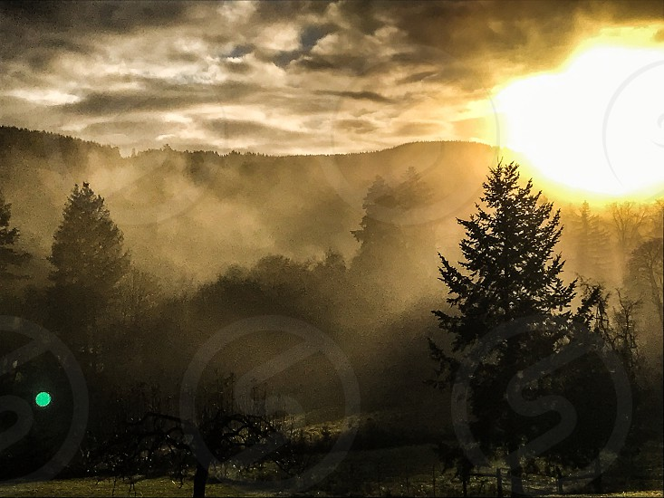 Sunrise field fog photo