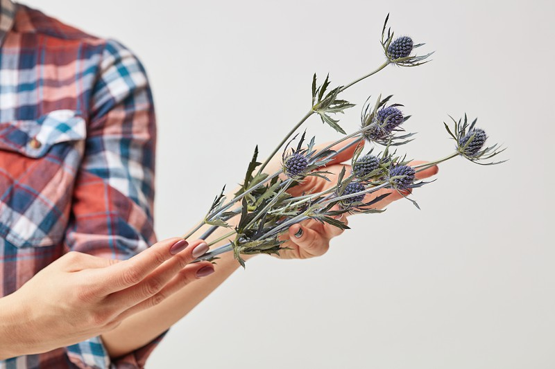 Hands of a young girl holding a branch of fresh flowers eryngium on a gray background. Mother's Day photo