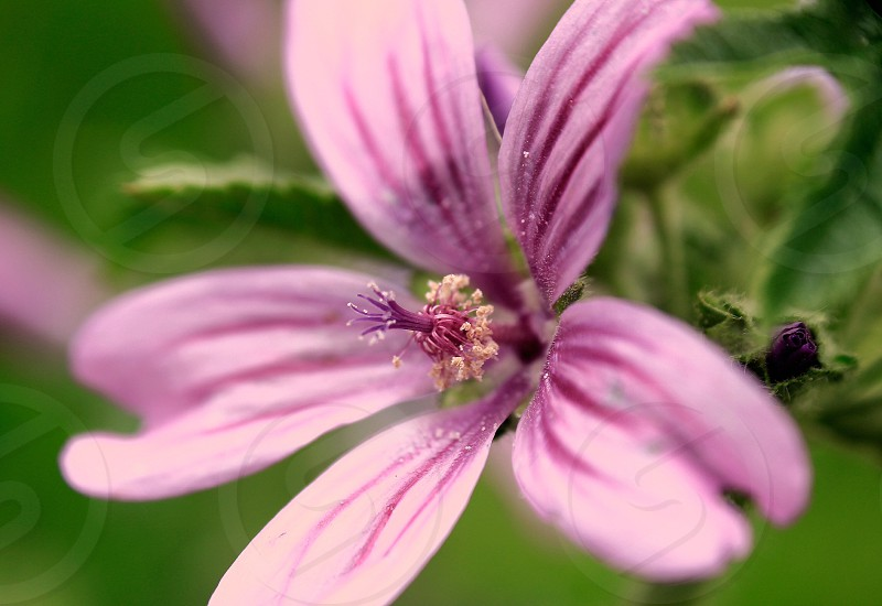 Flor photo