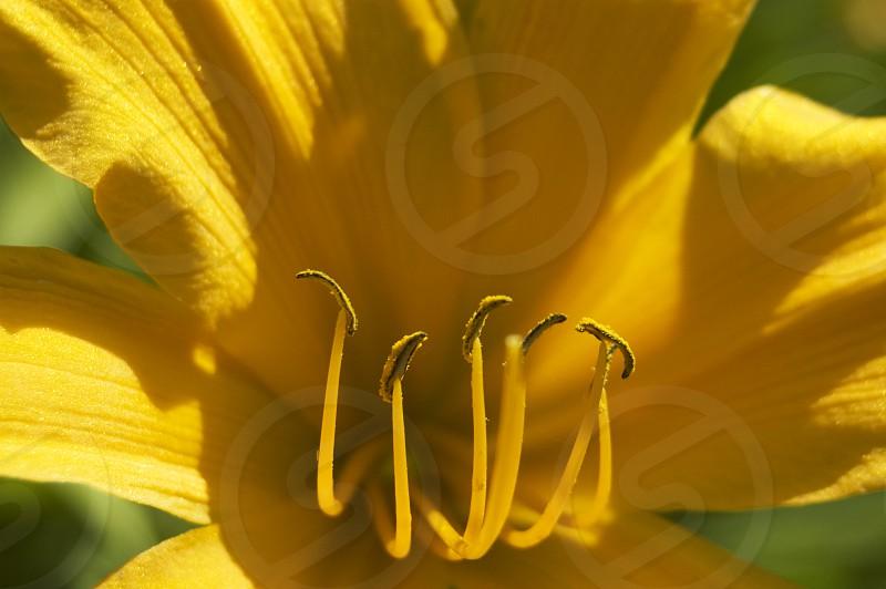 Yellow Flower Marco photo