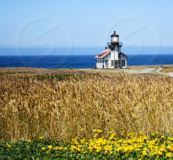 Small lighthouse or light sits near the ocean and field of golden grass photo
