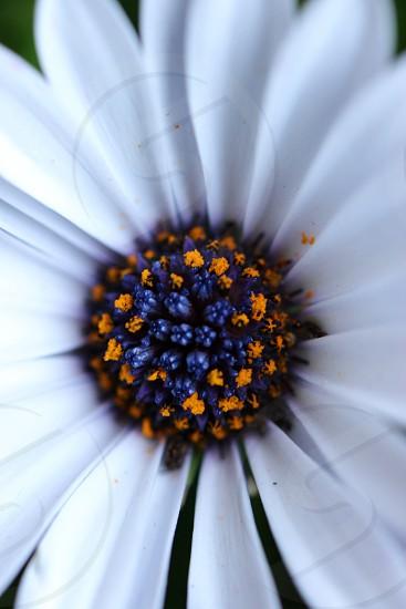 white blue and orange flower image photo