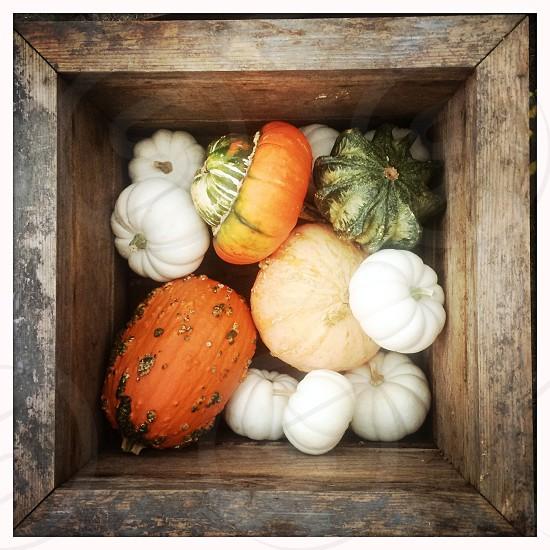 White and Orange Pumpkins in Wood Box photo