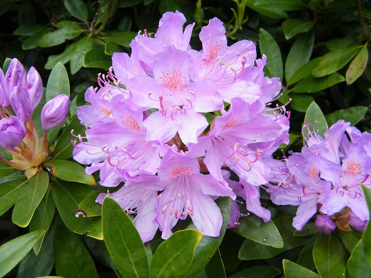 Macro shot of flower photo