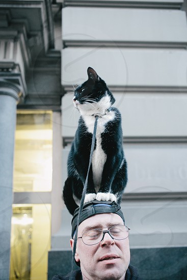black and white haired cat sitting on man's head photo
