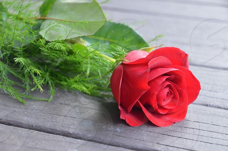 Flower rose beautiful detail photo