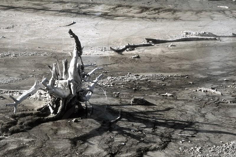gnarled driftwood tree on beach black white photo photo