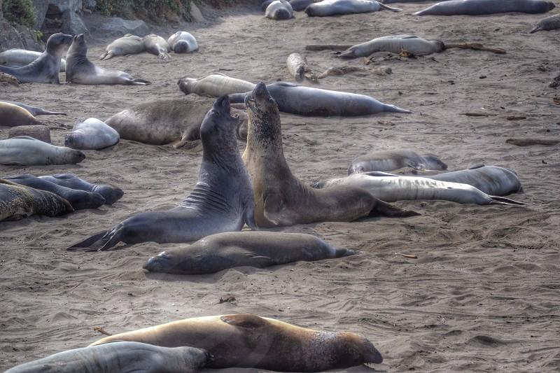 On the central coast of California at Piedras Blancas.  photo
