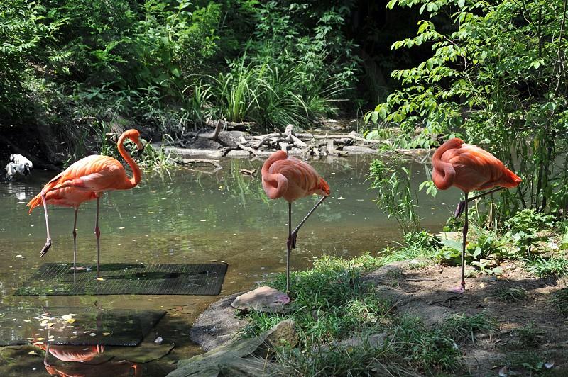 Flamingoes photo