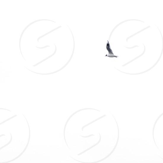 white bird photo