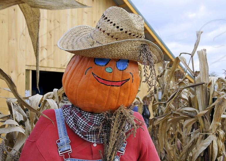 Scarecrow Fall Pumpkin photo