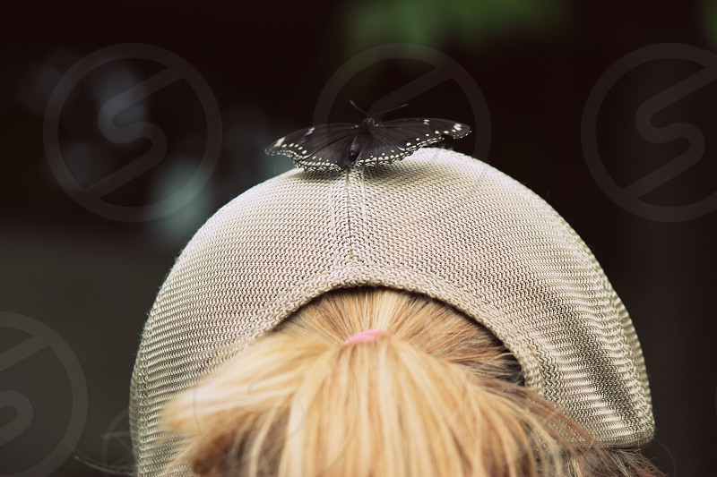 butterfly black wings fly nature hat pony tail photo