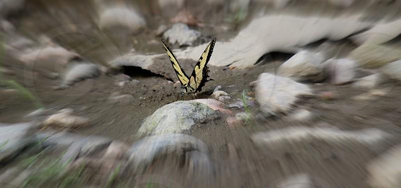 Flutter Bye Butterfly photo