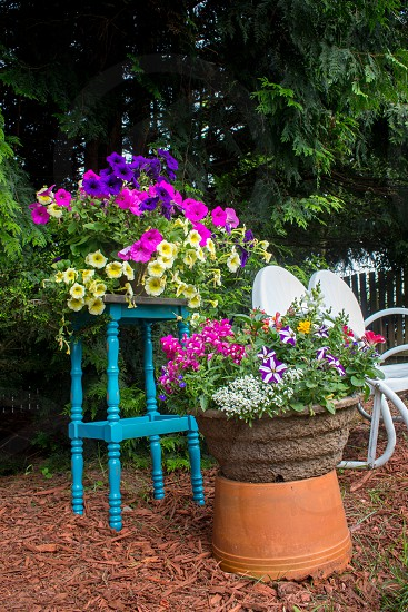 Petunias flowers summer garden blue container annuals bench trees photo