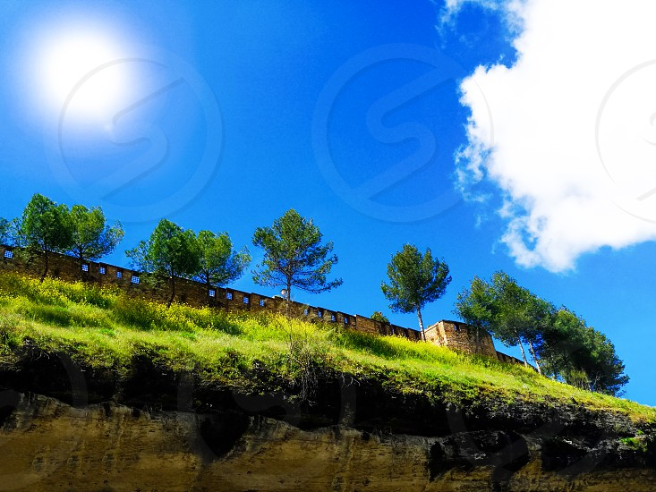 Beautiful pine trees on background high mountains. Carpathian mountains summer landscape. photo