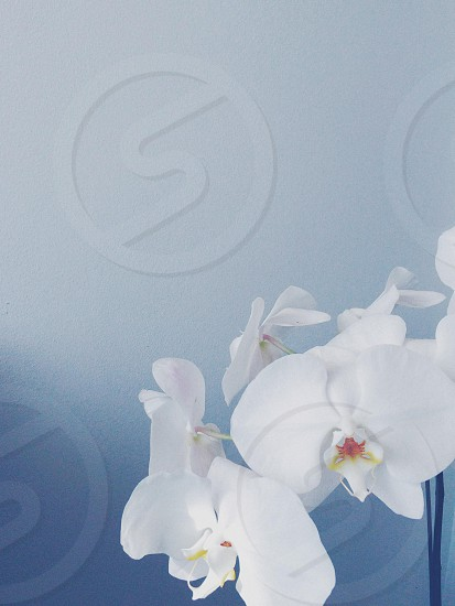 Orchid calm blue tranquil peace photo