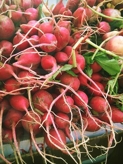 radishes  photo