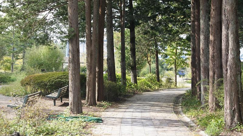A Narrow Path (Japan) photo