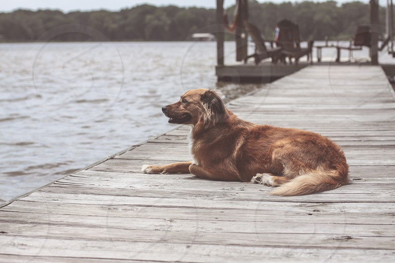 Dog sitting on a dock retro colors. Relaxed feeling. Lake photo