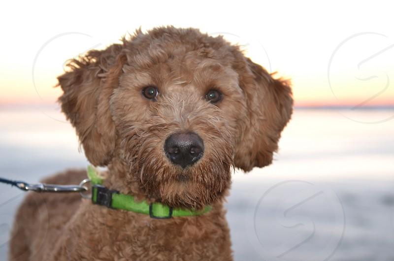 Dog on beach  photo