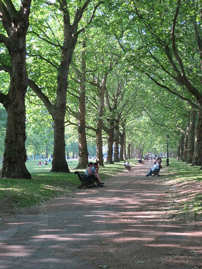 Park setting in Green Park London England.  photo
