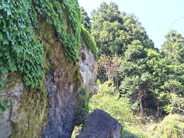 森の入り口の巨大岩(Huge rock in the entrance of the forest) photo