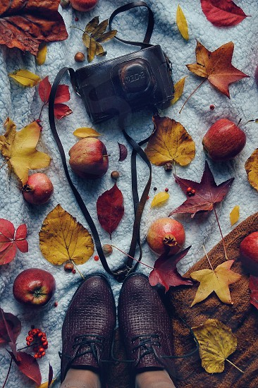Autumn on the ground photo